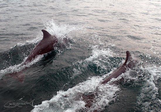 A pair of bottlenose dolphins in the Espiritu Santo National Park, La Paz, Mexico.