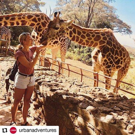 Giraffe Friend 🦒❤🦒