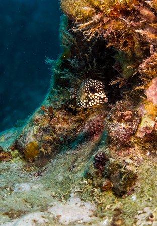 small trunk fish