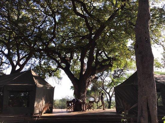 Национальный парк Катави, Танзания: under the tamarind tree