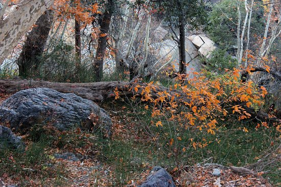 Fall scene from the Amphitheater trail bridge (about 5100 ft elevation