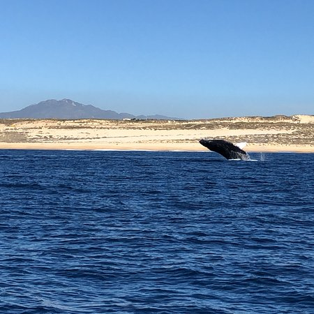 Zodiac Whale Watching Adventure Tour in Cabo San Lucas – fotografia