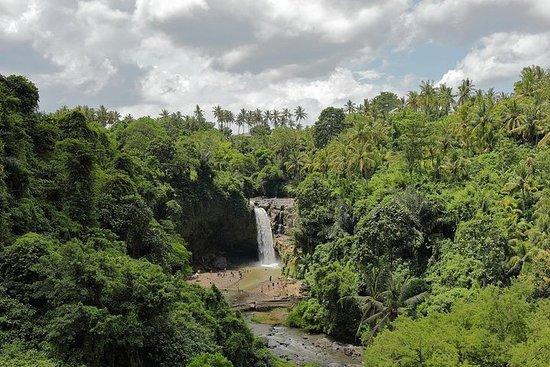 Visite du village d'Ubud avec cascade...