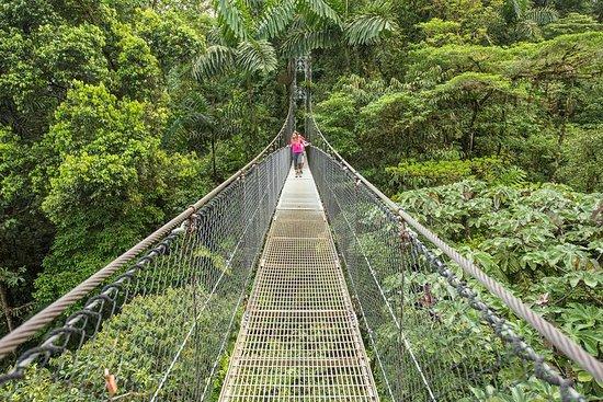 Promenade des ponts suspendus dans le...