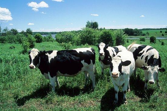 Cow Heaven: En VoiceMap Driving Audio Tour fra Point Reyes Seashore...
