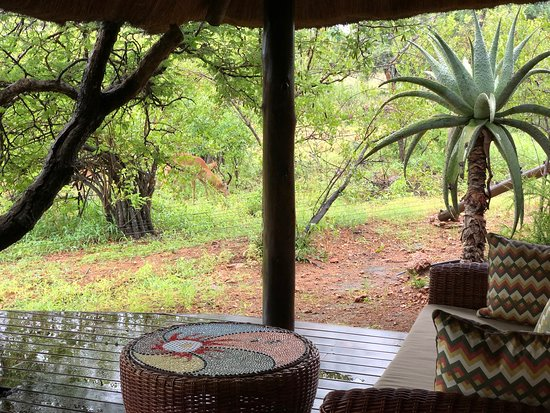 写真Naledi Game Lodges枚