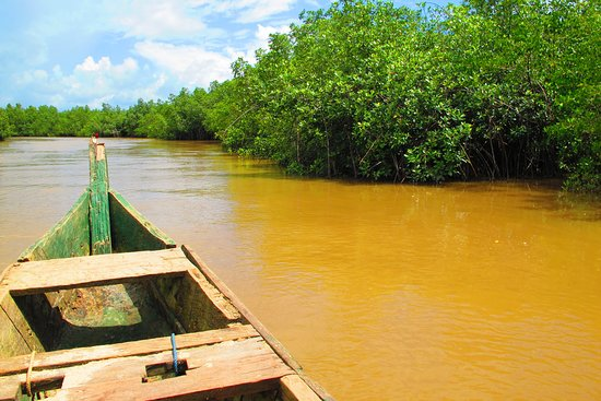 Butre, Гана: I take a Boat upstream the River to discover the Mangroove Woods