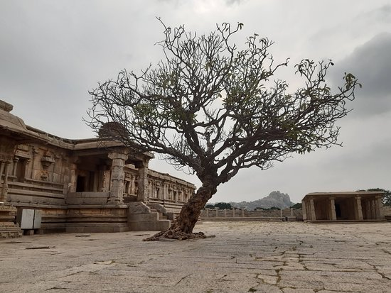 Ancient tree in Hampi, near temple of singing pillars