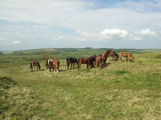 Ponies on Cissbury Ring