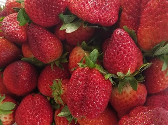 Loxley, AL: Strawberries from the Burris family farm