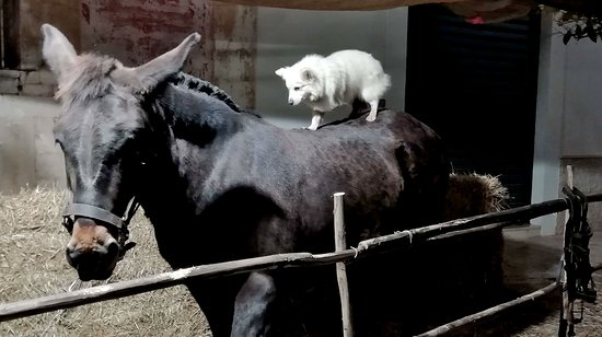 Turi, Italien: Two cute animals. They are always together. They will be friends for ever! :)