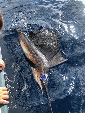 Sint Maarten, Svätý Martin: Sailfish in January