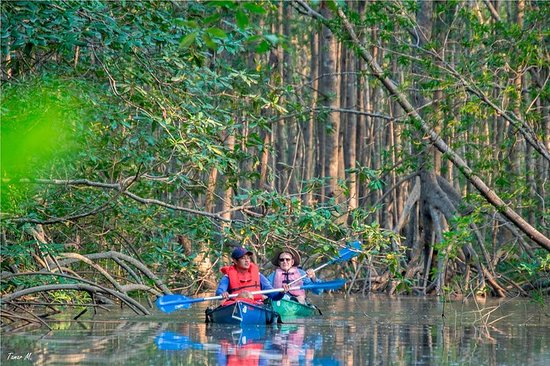 Mangrove Kayak Exploration Tour from Puerto Jimenez