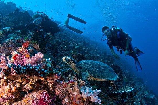 8 giorni | Tour di immersioni alle
