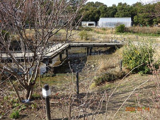 2020-01-14_開園以来、抜いたことのない なんちゃってビオトープの水を、浦安市役所が抜いています。皆様の税金で、大改修を行います。   「俺たちが公園を管理しているんだ、自然の池だ、贅物がたくさん居るんだ、勝手に触るないじるな」という、公園美化ボランテイア達は、結局、 自分で、自分自慢の池を、維持管理することはできませんでした。  片付けない言い訳もすごいんですよ。「俺たち歳をとったから、体が動かない」「俺たちは片付けるなんて言ってない」「できないことはやらないのが、育む会のモットーだ」。そうですよ。  開園当初の2007年からやってないのに。。。 450人の会員数を、自慢しまくっていたのに。。。 全員が2007年当初から、高齢で、作業不可能だったのでしょうか?
