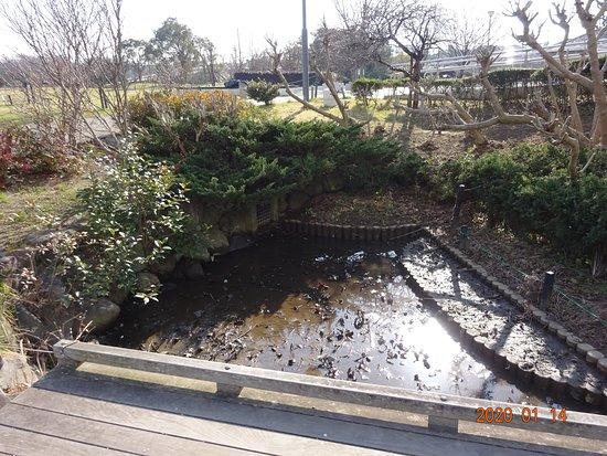 水を12センチほど抜いただけなのですが、もう泥が現われました。この状態で、水性生物を外から持ち込み、泳がせていました。大量の植物を増やして喜んでいました。   ふれあいの森公園を育む会代表とその仲間達は、この状態を公共の人工池の常識ある維持管理だと思っていた様です。  税金で活動しておきながら、後片付けはやらないなんて、子供よりひどいです。