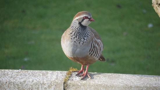 Just one of our regular summer visitors in the garden