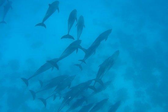 תמונה מRoyal Dolphin House
