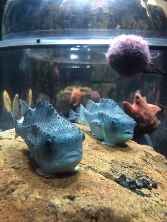 See local Icelandic fish and invertebrates in specially designed displays that let you get closer!