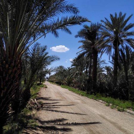 The landscape just out of the castle (Ariz Ecocastle)