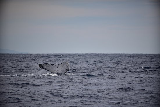 Humpback Whale Watching in Cabo San Lucas: CABO TREK PHOTO 1/8/2020