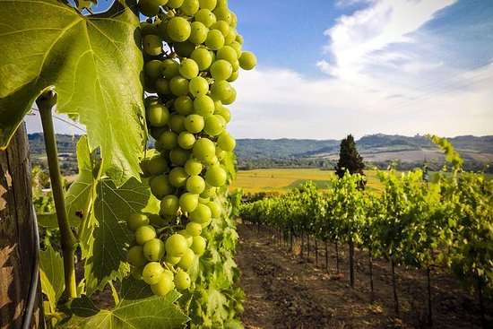 Excursão de um dia pelo vinho de Kakheti