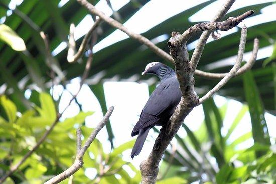 Bird Feeding Sanctuary & Montego Bay...