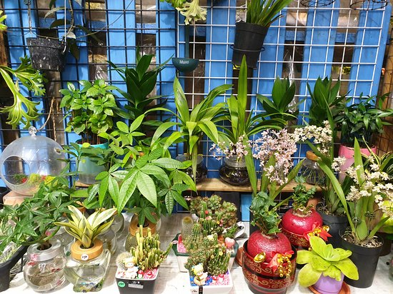 Taichung Flower Market