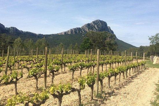 Pic St Loup wijnreis uit Sète
