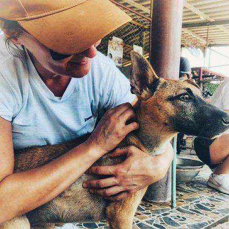 Phúket, Thajsko: Soi Dog Foundation
