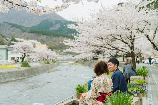 Tsuruoka, Japan: 春には川端の桜並木が綺麗です。