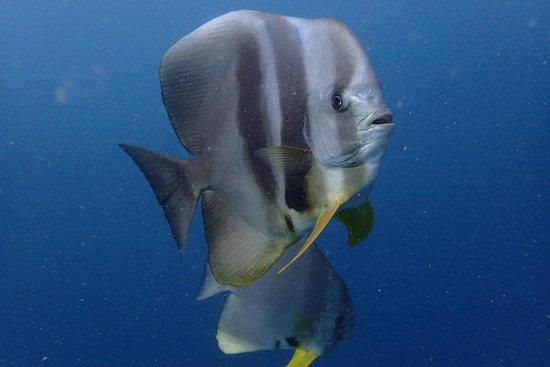Aqua Ventures Diving