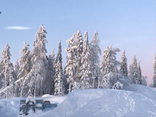 Husky Safari 5 km from Levi: Zo veel sneeuw boven op de berg!