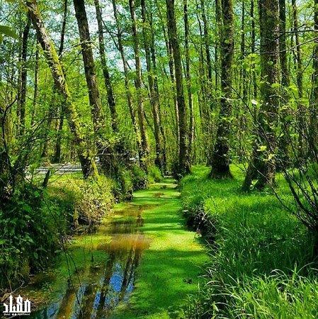 Gilan Province照片