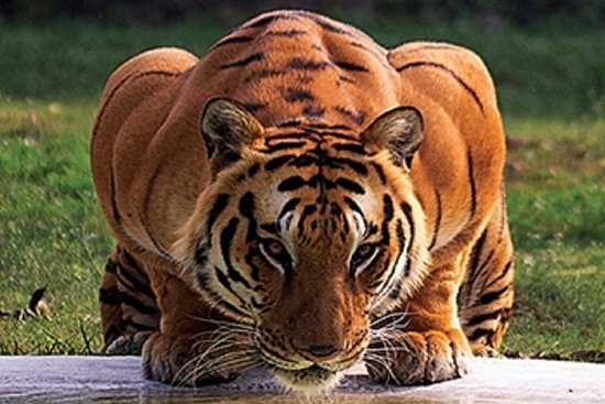 Best Ranthambore Tiger Safari Tour Package