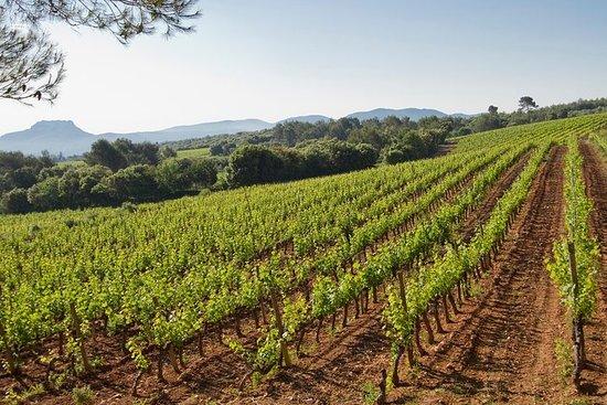 Privat dagstur: vinsmaking tur inkludert pinic lunsj fra Cannes