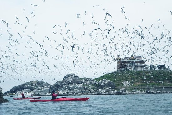 A sea kayak tour of Kabushima Island...