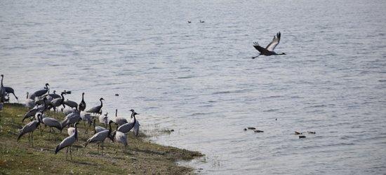 Gudo Bishnoi Lake