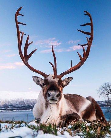 Квалойа, Норвегия: Kvaloya - Noruega 😍 📸 @liisachristensen
