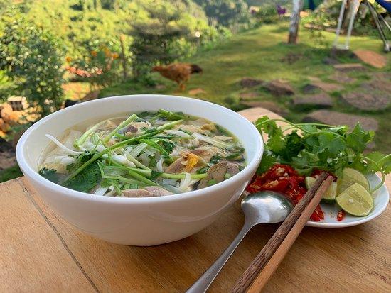 Gia Nghia, Vietnam: Phở gà Hà Nội tại Thung Lũng  Vị khách đáng yêu của MeGarden.