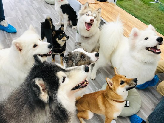BlaBlaBoo - Premium Dog Cafe