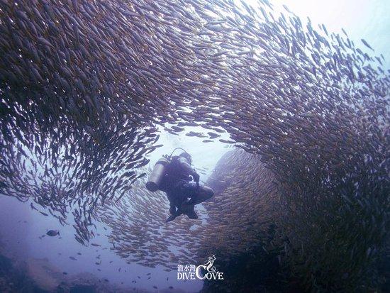 Dive Cove Phuket