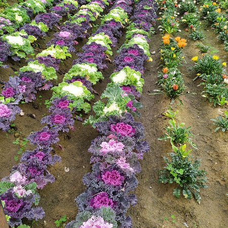 VISIT TO PRATAPGARH FARM..WELL PLANNED VILAGE CONCEPT