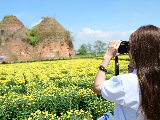 Cho Lach, Vietnam: Come to Cai Mon Flower Village from November to January, you'll able to see thousands of households are growing flowers to prepare for Lunar New Year like carnation, dahlia, marigold...