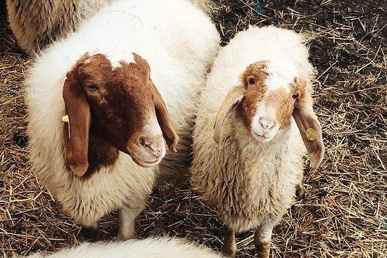 Delphi myth and the Animal farm