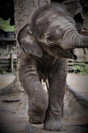 Baby Elephant having fun