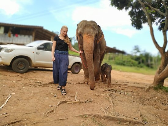 Walking with elephants is a key element @ Elephant Special Tours. On these trips they can find their natural food.