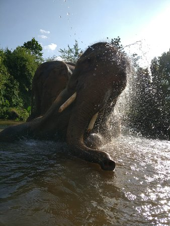 Playing in the water is fun for elephants every single time.
