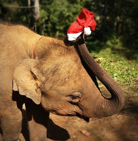 Merry Christmas - elephant style.