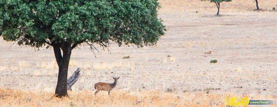Province of Badajoz, สเปน: Descubre la belleza de uno de los lugares más solitarios de España con estas rutas y actividades en plena naturaleza. Es uno de los últimos parajes españoles declarados Reserva de la Biosfera por la UNESCO (la primera de la provincia de Badajoz y tercera de la comunidad autónoma). Hablamos de la Siberia Extremeña. + info 👇👇 http://kilometrosquecuentan.com/siberia-extremena/